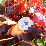 Piratenpartei Logo : utele.eu