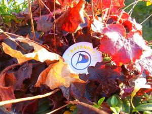 Piratenpartei Logo in Herbstblättern 2012 : utele.eu
