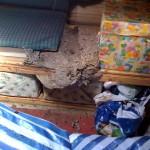 Jetzt beim Aufräumen den Grund für die vielen Wespen im Herbst auf dem Speicher gefunden...