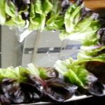 Salatblätter Halloween-Rohkostplatte mit viel Deko
