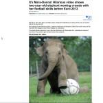 Mara-Donna, Elefant spielt Fußball, Artikel bei dailymaille_eu