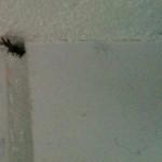 Noch halb in ihrem Loch - Jutta, die Spinne in unserem Badezimmer