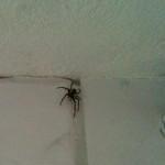 - Jutta, die Spinne in unserem Badezimmer