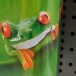 Buch mit Froschmotiv
