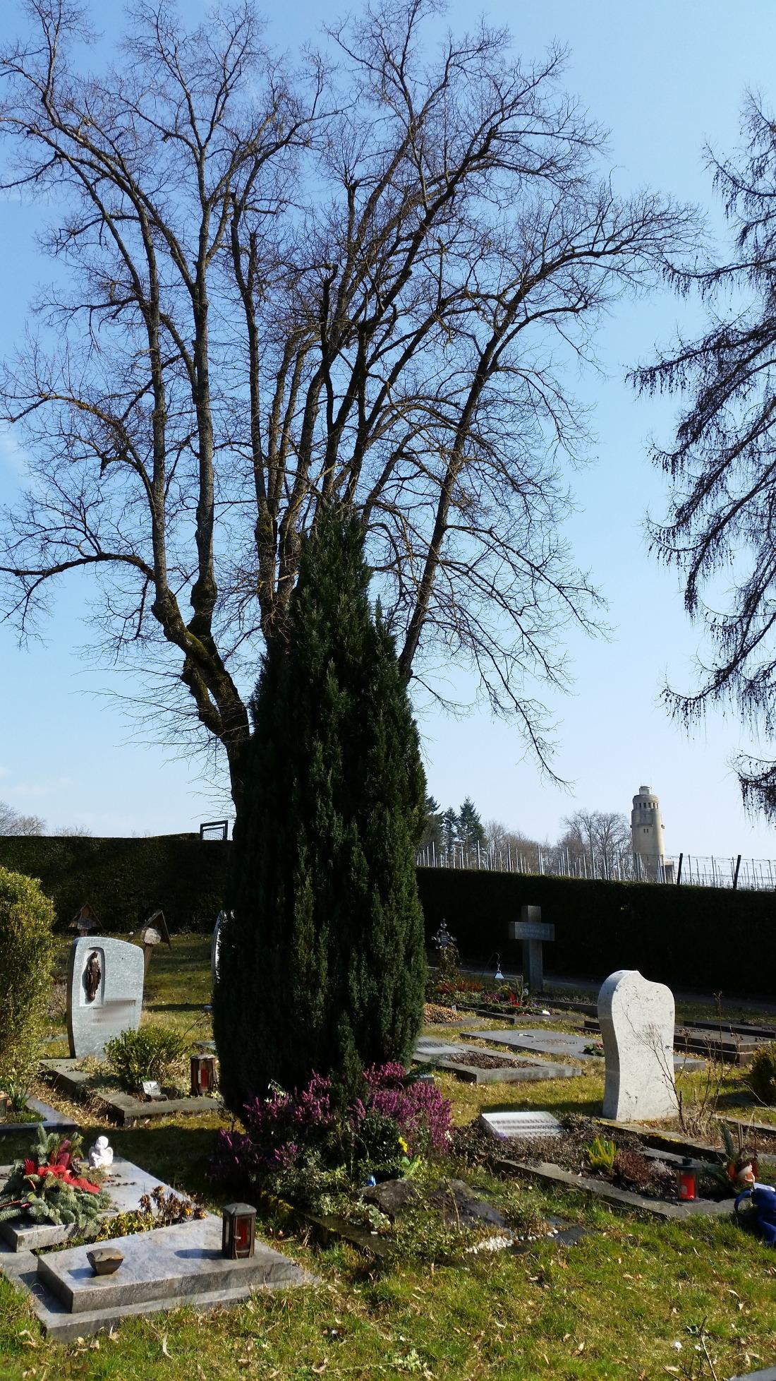Schön gelegene Gräber auf dem Friedhof - Pflanzen und mehr