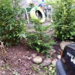 Blick von vorne wird keinen Froschen zeigen - Gartendeko Reifenfrosch bepflanzt