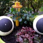 Froschaugen mit Krönchen - Gartendeko Reifenfrosch bepflanzt