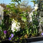 Hyazinthe und Krokus - Pflanzen, Blümle, Balkon, Frühling