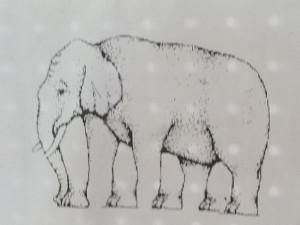vier, sechs oder acht? Wie viele Beine hat der Elefant?
