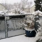 auf der Straße ist schon wieder nichts mehr - Kleiner Schneeelefant auf dem Balkon in Konstanz - #Schnee