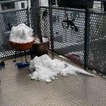 Alles an Schnee zusammenkratzen - Kleiner Schneeelefant auf dem Balkon in Konstanz - #Schnee