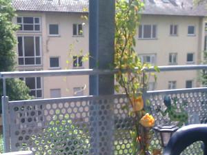 6/2010 Ehemals Studiwohnheim, leerstehend, Wollmatinger Straße, Bundesimmobilie, Sanierung, Konstanz
