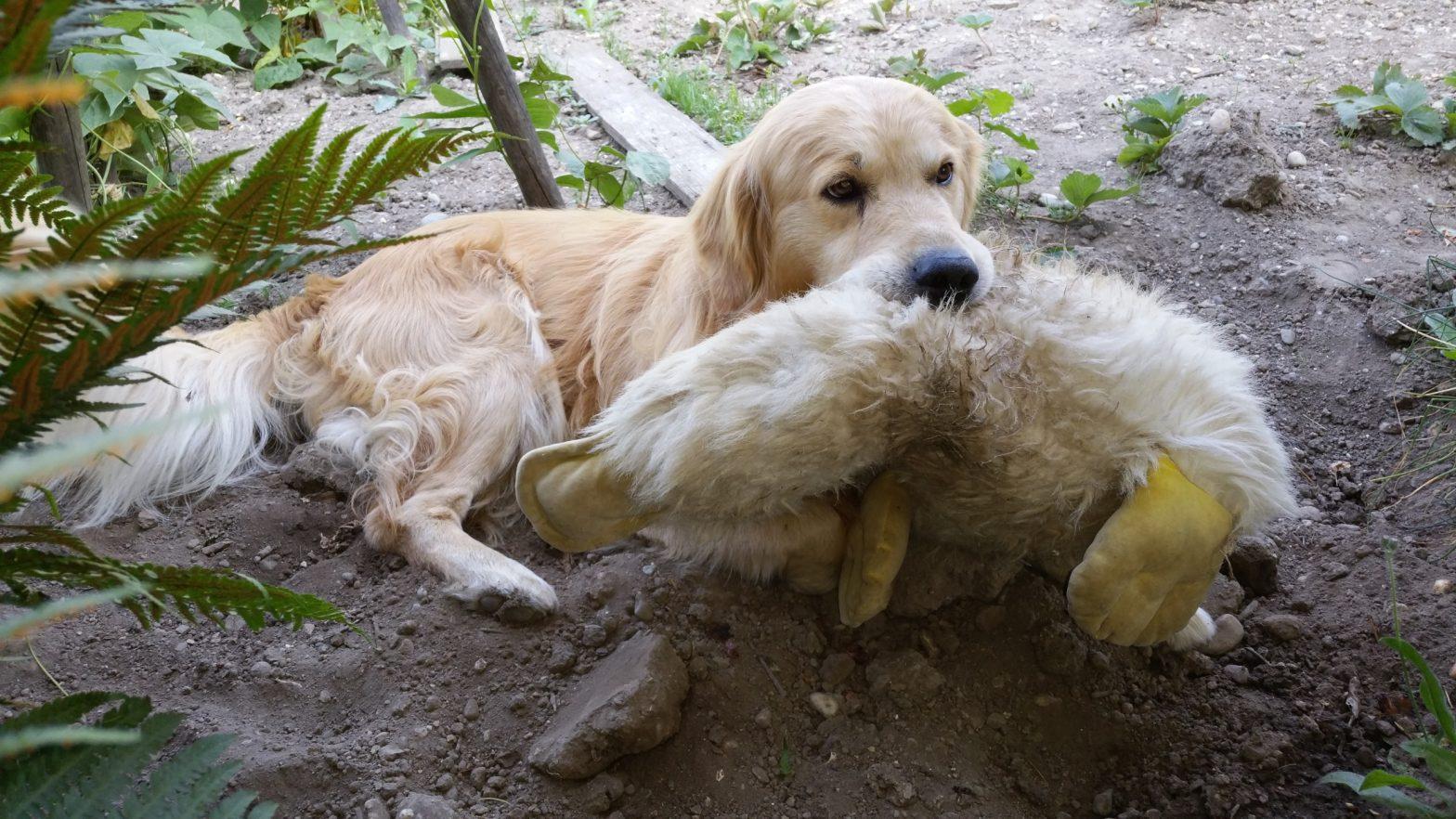 Wilson - Bekannte und unbekannte Hunde - Angst vor Hunden - utele.eu