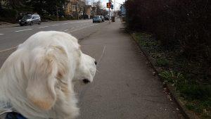 Du Narr (51 km/h statt 50 km/h)- statt Smiley bei der Geschwindigkeitsanzeigeanlage in Konstanz hat Fasnet - utele.eu