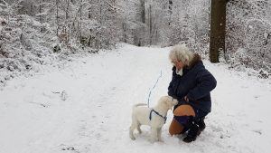Richie und Ute, im Schnee, Welpe, goldenretriever, hund, jungs, richie