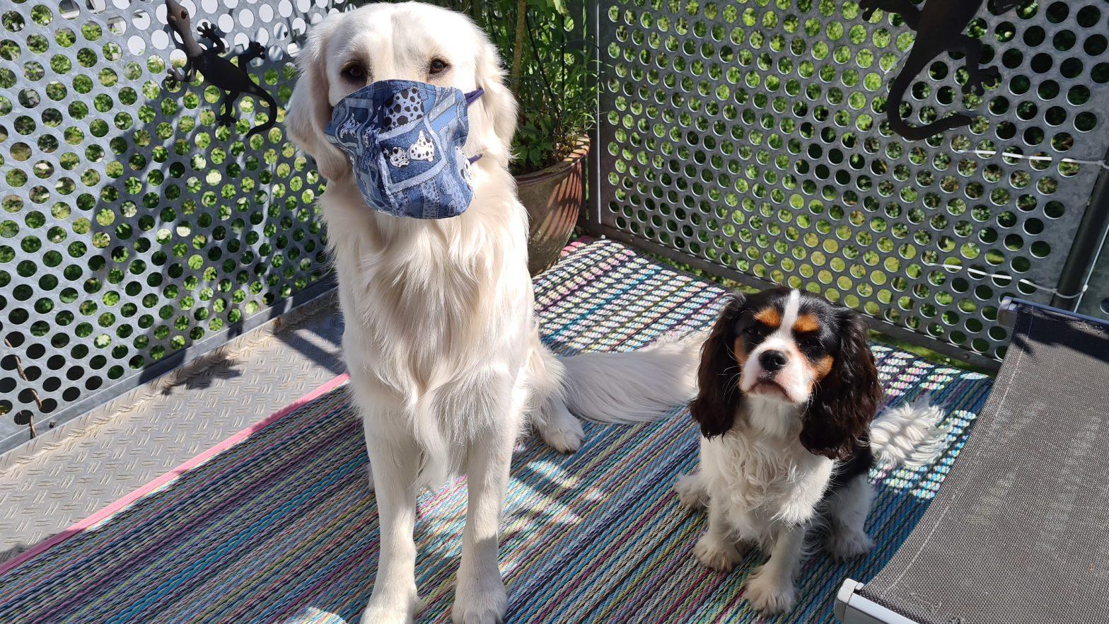 Mauldäschle für die Jungs wären schwierig, mal kurz Mund-Nasenschutz bei Richie klappte vorbidlich, utele.eu