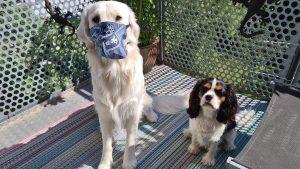 Mauldäschle für die Jungs wären schwierig, mal kurz Mund-Nasenschutz bei Richie klappte vorbildlich, utele.eu
