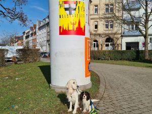 #HonarroDehom mit dem Wappen der Stadt Konstanz, badischen Farben und Narrenbändeln - han einer Litfaßsäule in Petershausen im Sonnenschein plakatiert, davor der Golden Retriever Richie und der Cavalier-King-Charles Gismo