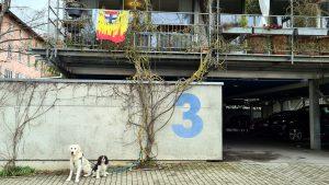 unterwegs irgendwo am Rande: #HonarroDehom als Logo, Fahne oder Plakat. Motiv mit Silhouette und Wappen der Stadt #Konstanz, dazu #badische Farben und Narrenbändel #GoldenRetriever Richie und der #CavalierKingCharles Gismo
