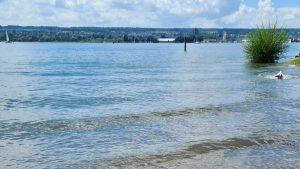 Goldie tobt im Wasser, Bodensee